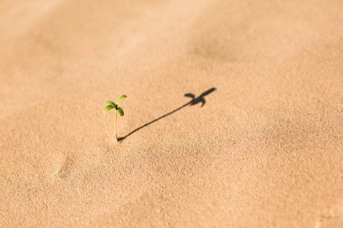 Tiny sprout growing in fine yellow sand